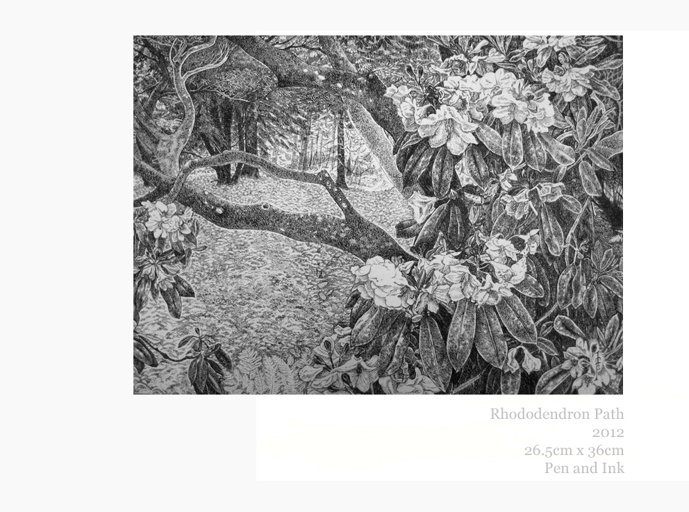 Rhododendron Path, Pen and Ink, 2012